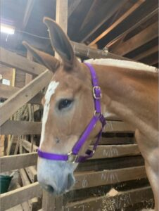 Jen the mule